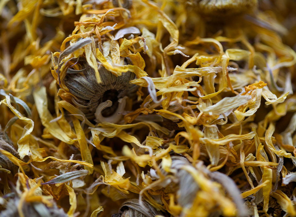 Calendula officinalis, common marigold, herbs, healthy food, power of herbs,